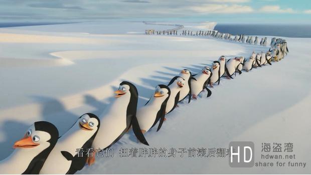 [2014][美国][马达加斯加的企鹅 Penguins of Madagascar][DVD/MKV/BT下载]