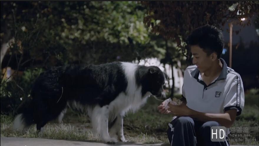 [2013][中国大陆][喜剧/运动][金牌流浪狗][720P]