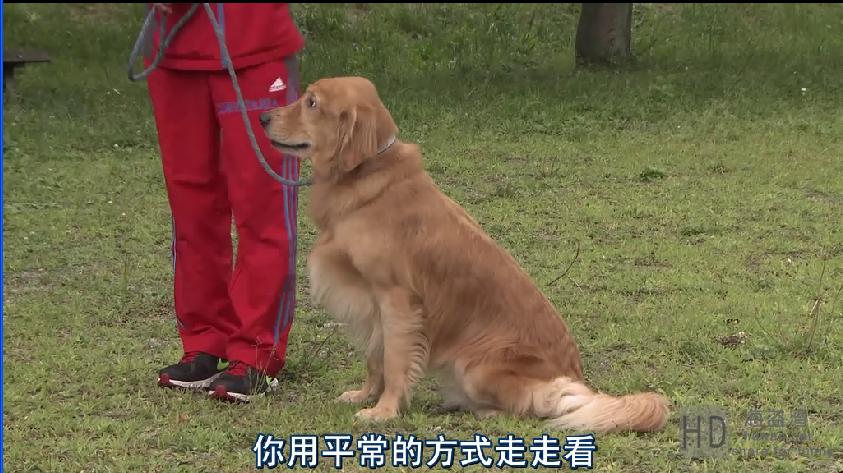 [狗狗没有家/为你取名的那一天][2015][日本][剧情][BD-MKV/2.07GB][日语中字][720P]